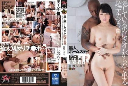 DASD-491 Black Homestay NTR Hidden From The Towel Even Though I Hide It Super Decamar Hen Miyazaki Shiori